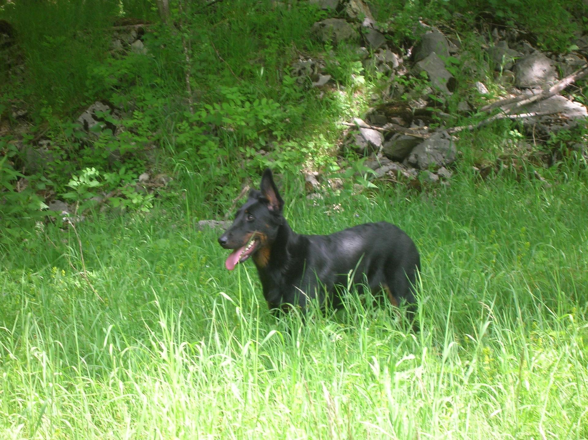 lamichien pension et éducation canine